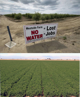 Central Valley and Imperial Valley Farms
