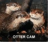 georgia_aquarium_otter_cam1.png