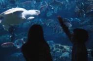 georgia_aquarium_turtle_cam1.png