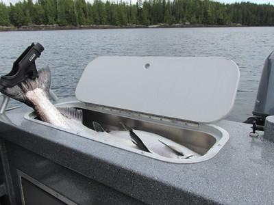 Best Salmon Fishing