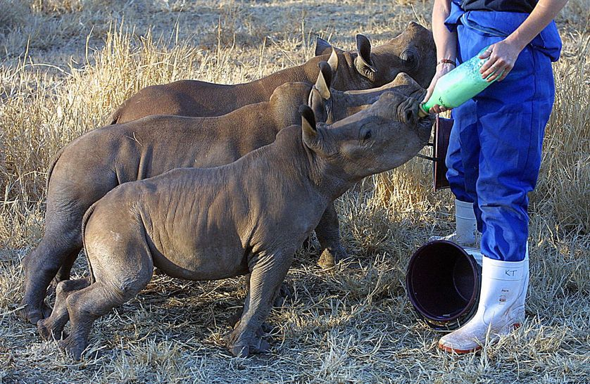 rhinos-bottle.jpg.838x0_q80.jpg
