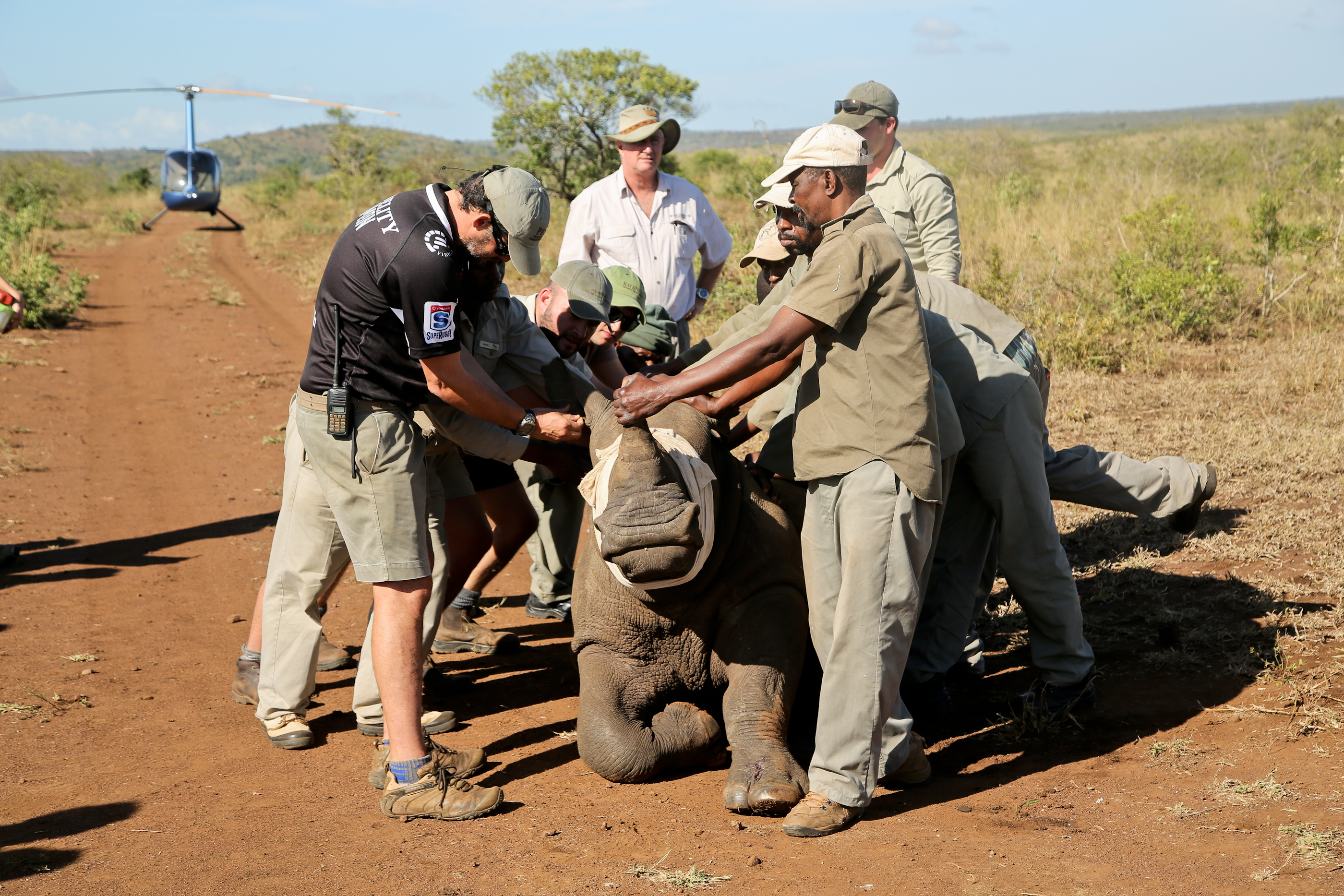 Rhino-dehorning-and-conservation-at-andBeyond-Phinda-Private-Game-Reserve-(1).jpg