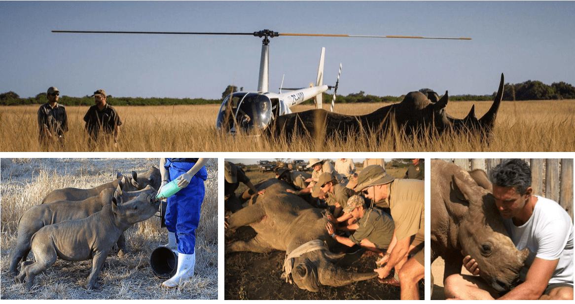 Rhino rescue collage