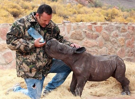 man-feeding-rhino.jpg